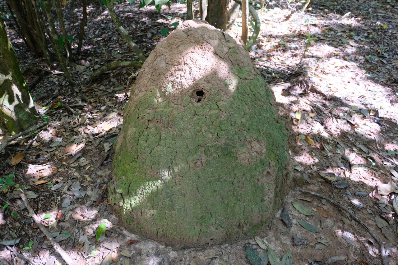 termite mound in Nam Ha NPA