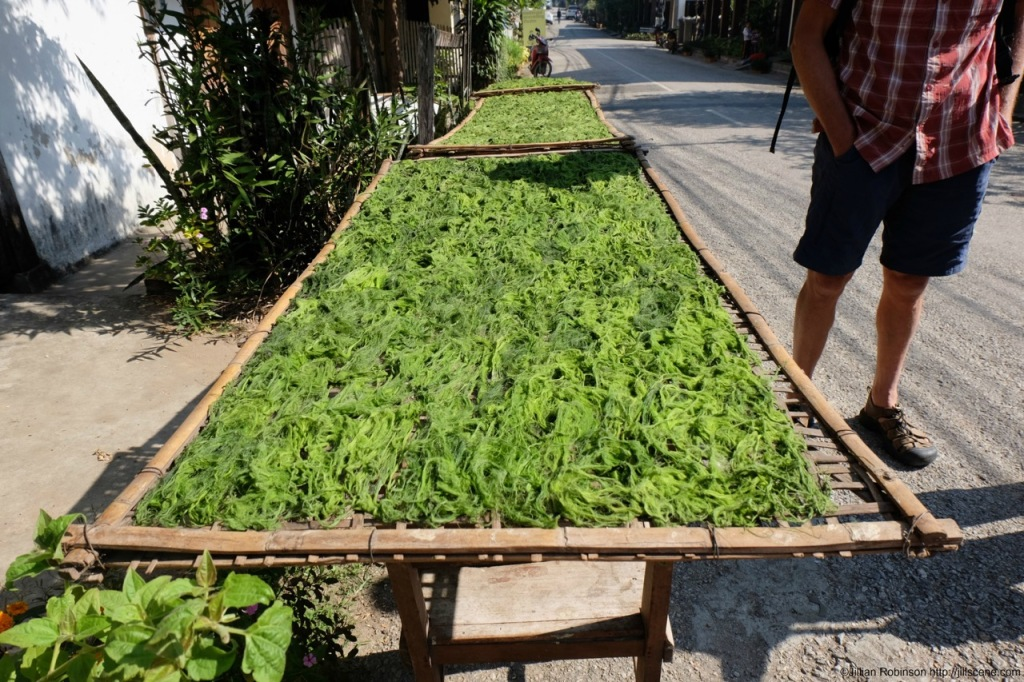 Mekong weed drying in the sun